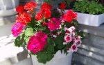 flowers35