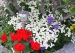 flowers46